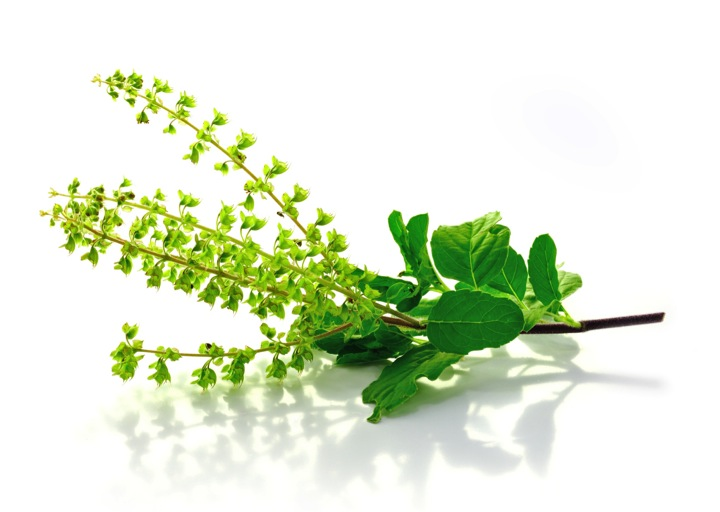 How Tulsi can help you stay healthy?