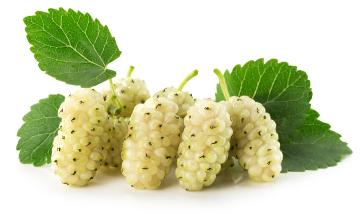 Why is White Mulberry the next superfood?