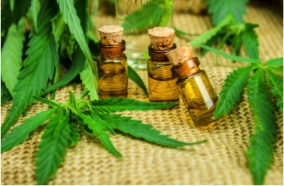 Cannabis Oil – and why it is good for you?