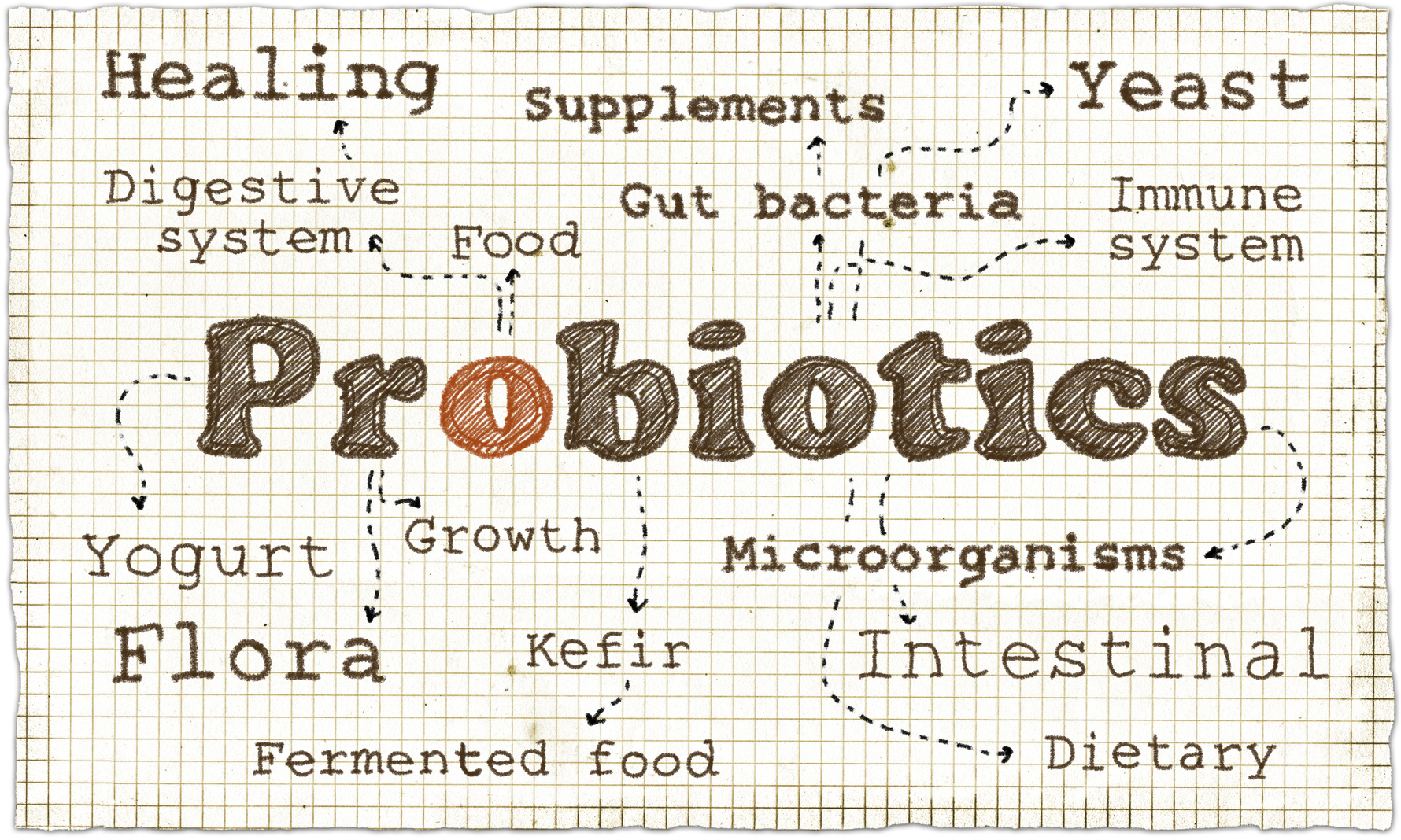 Bacteria and your gut!